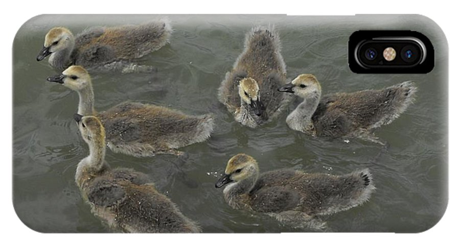 Ducks IPhone X / XS Case featuring the photograph Ducklings by Brandi Maher