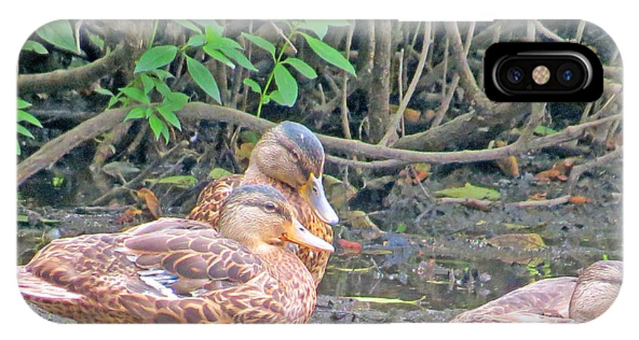 Ducklings IPhone X Case featuring the photograph Ducklings Emancipated by Kathy Johnson