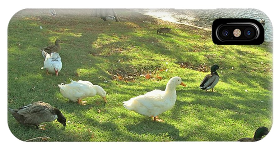 Ducks IPhone X Case featuring the photograph Ducks At The Park by Donna Wilson