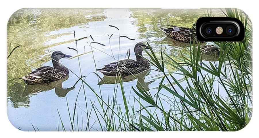 Ducks IPhone X Case featuring the photograph Ducks by Susan Eileen Evans
