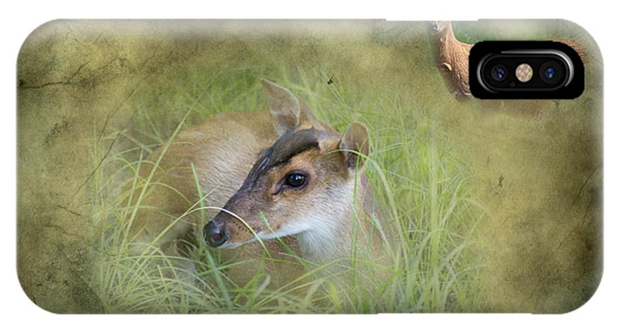 Duiker IPhone X Case featuring the photograph Duiker Endangered Antelope by J Darrell Hutto