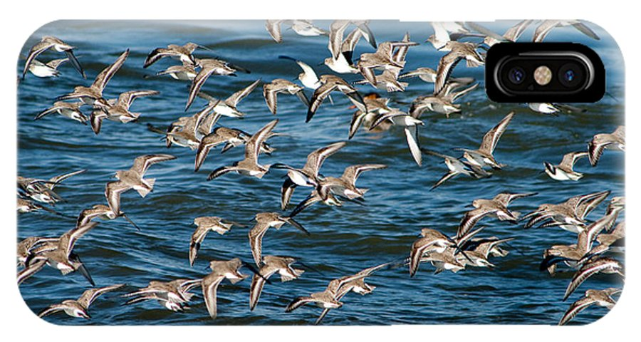 Dunlins IPhone X Case featuring the photograph Dunlins In Flight by Kristia Adams