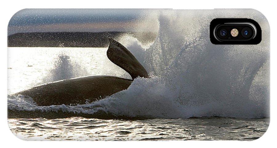 Cetaceans IPhone X Case featuring the photograph Ea 897 by Francois Gohier