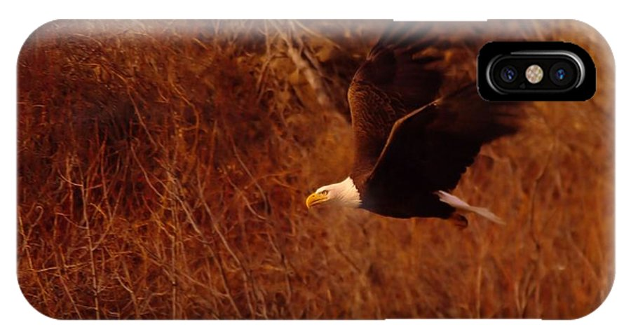 Eagles IPhone X / XS Case featuring the photograph Eagle In Flight by Jeff Swan