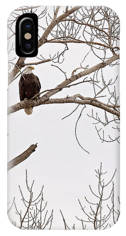 Eagle IPhone X Case featuring the photograph Eagle In Tree by Deb Buchanan