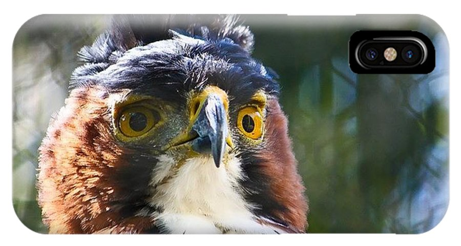 Eagle IPhone X Case featuring the photograph Eagle by Promote Talent