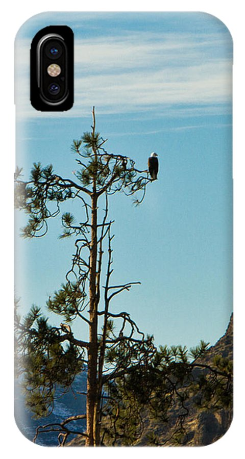 Eagle IPhone X Case featuring the photograph Eagle's View by JoJo Photography