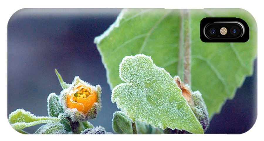 Frost IPhone X Case featuring the photograph Early Morning Frost by Optical Playground By MP Ray