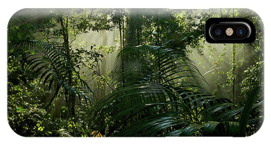 Outdoors IPhone X Case featuring the photograph Early Morning Light In The Rain Forest by Tim Laman
