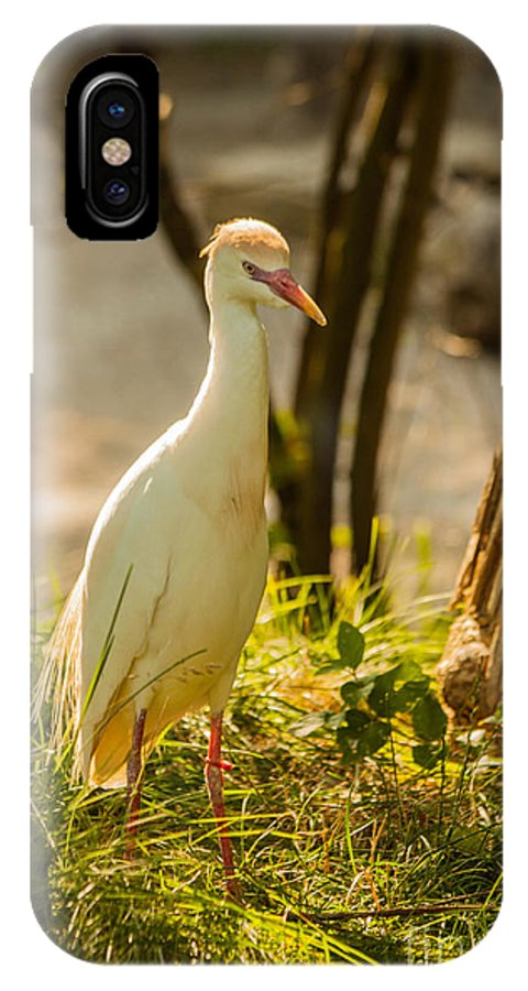 Kc Zoo IPhone X Case featuring the photograph Early Morning Light On The Bird by Terri Morris