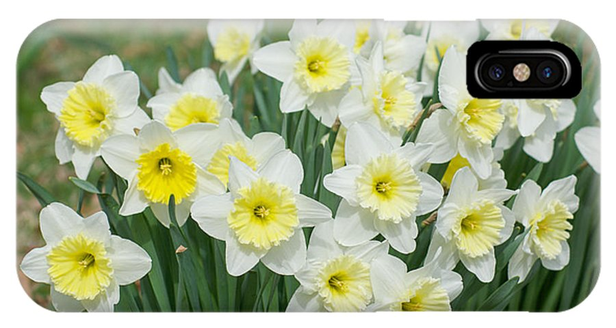 Flowers IPhone X Case featuring the photograph Early Spring by Michael Hereford