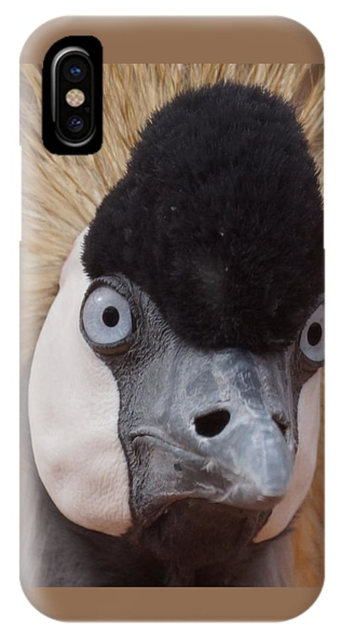 African Crowned Cranes IPhone X Case featuring the photograph East African Crowned Crane 6 by Ernie Echols