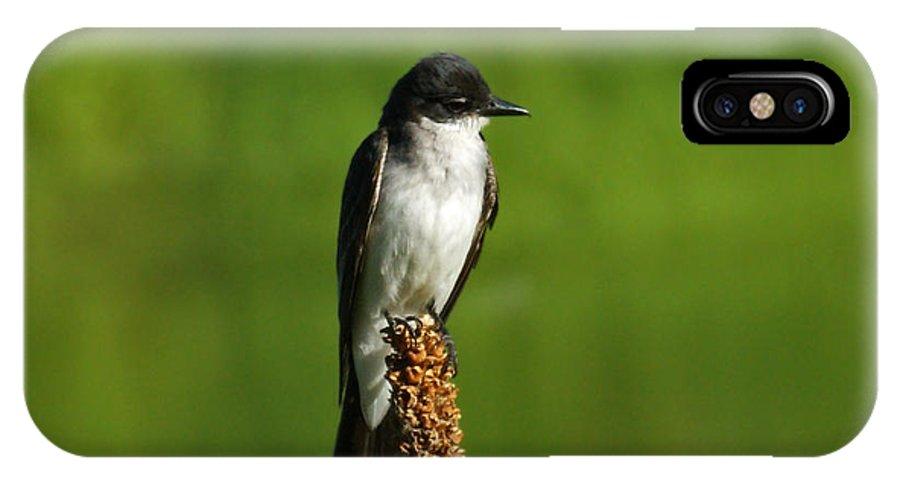 Eastern Kingbird IPhone X Case featuring the photograph Eastern Kingbird by Ernie Echols