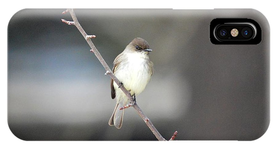 Eastern Phoebe IPhone X Case featuring the photograph Eastern Phoebe by Thomas Phillips