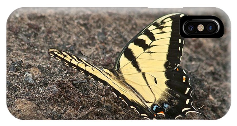 Adult IPhone X Case featuring the photograph Eastern Tiger Swallowtail 8564 3241 by Michael Peychich