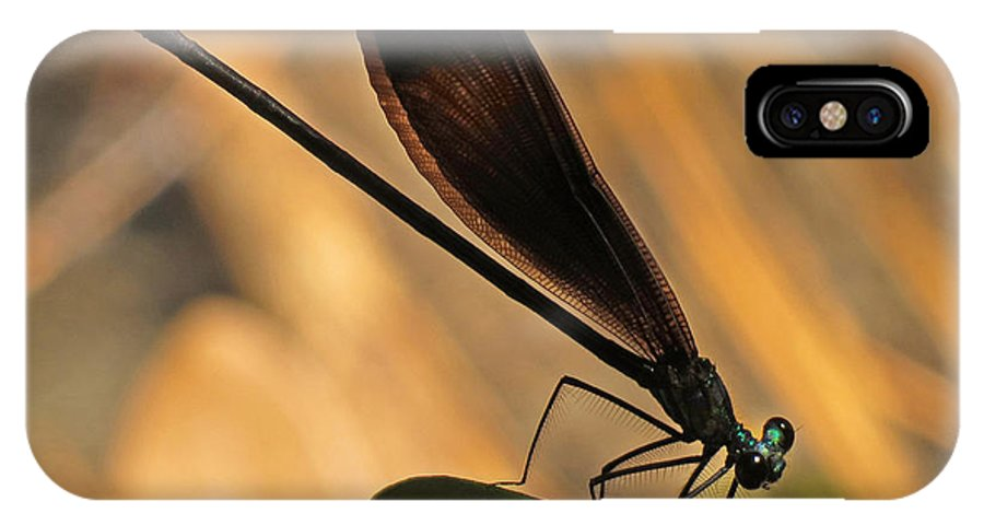Nature IPhone X Case featuring the photograph Ebony Damselfly by Deborah Smith