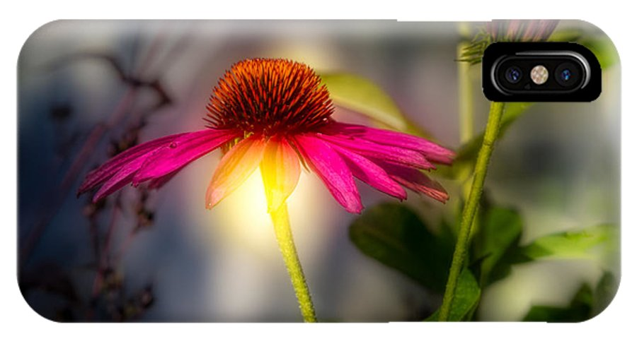 Flower IPhone X Case featuring the photograph Echinacea Sunrise by Bob Orsillo