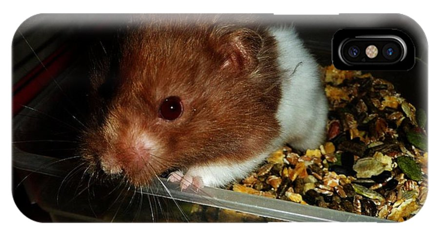 Syrian Hamster. Friendly. Cute. IPhone X Case featuring the photograph Edmundo by Beth Grant