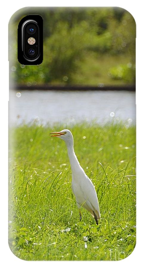 Egret On The Green-no2 IPhone X Case featuring the photograph Egret On The Green-no2 by Darla Wood