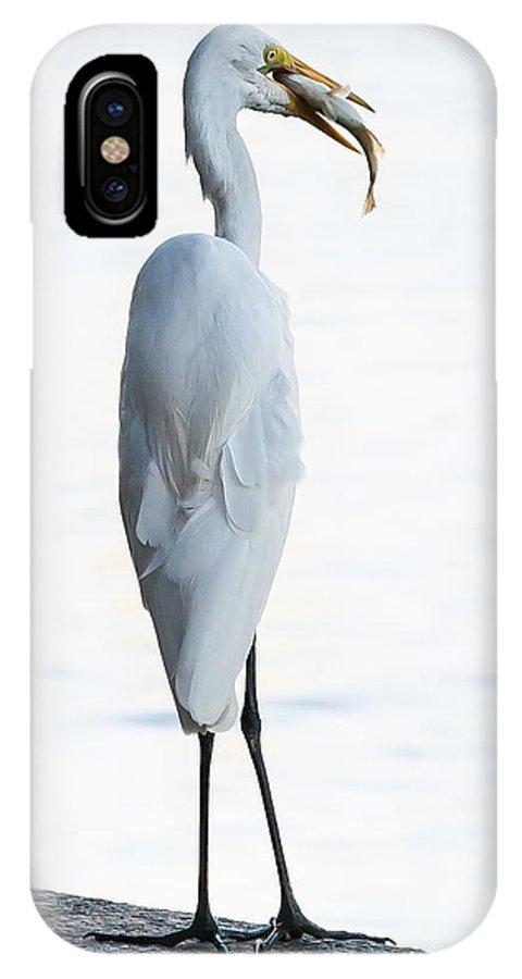 Brazil IPhone X Case featuring the photograph Egret Treat by Bob Rapfogel
