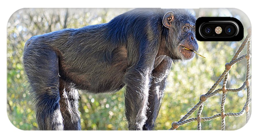 Chimpanzee With A Treat In His Mouth IPhone X Case featuring the photograph Elderly Chimpanzee by Jim Fitzpatrick
