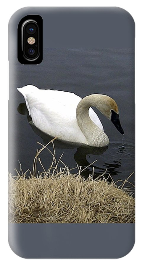 Trumpetter IPhone X Case featuring the photograph Elegance by Gigi Dequanne