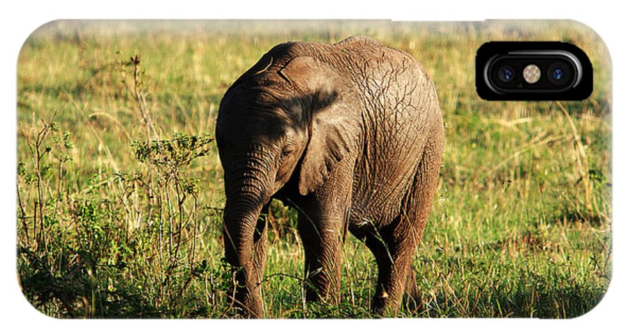 Elephant IPhone X Case featuring the photograph Elephant Calf by Aidan Moran
