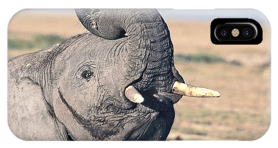 African Elephant IPhone X Case featuring the photograph Elephant Curling Trunk by Liz Leyden