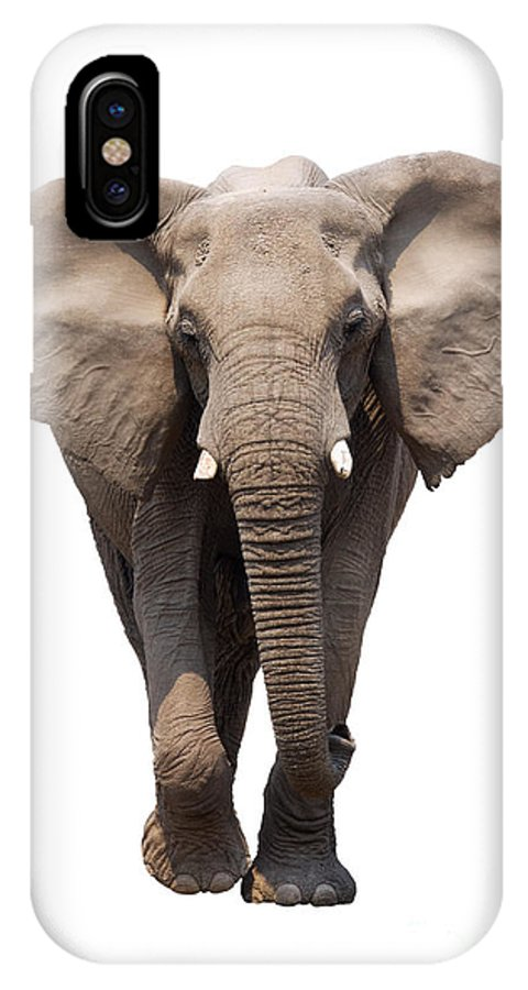Wild IPhone X Case featuring the photograph Elephant Isolated by Johan Swanepoel