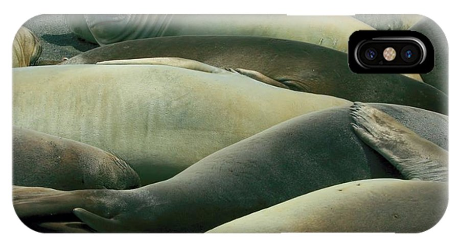 Juvy Elephant Seal IPhone X Case featuring the photograph Elephant Seal Pups by Amanda Stadther