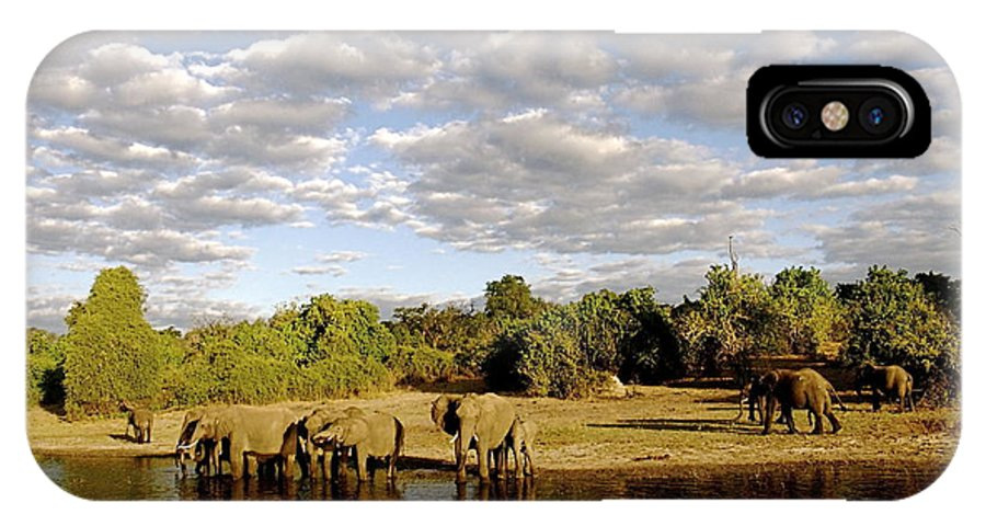 Elephants IPhone X Case featuring the photograph Elephants In Chobe by Marc Levine