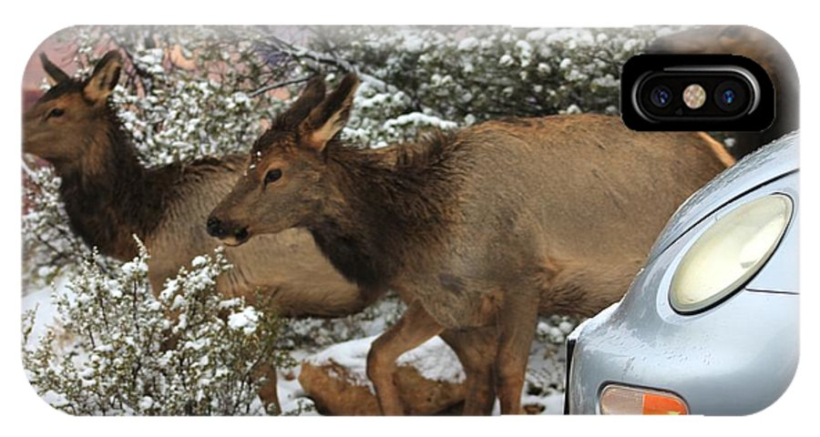 Elk IPhone X Case featuring the photograph Elk And A Beetle by Aaris K