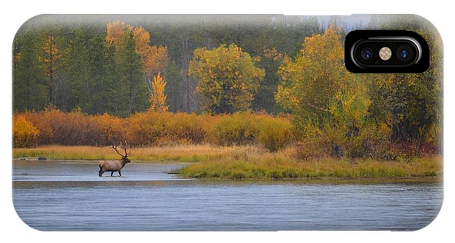 Elk IPhone X / XS Case featuring the photograph Elk Crossing by Deanna Cagle
