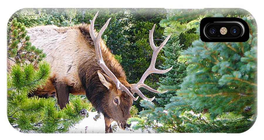 Rocky Mountain National Park IPhone X Case featuring the photograph Elk In Snow by J Havnen
