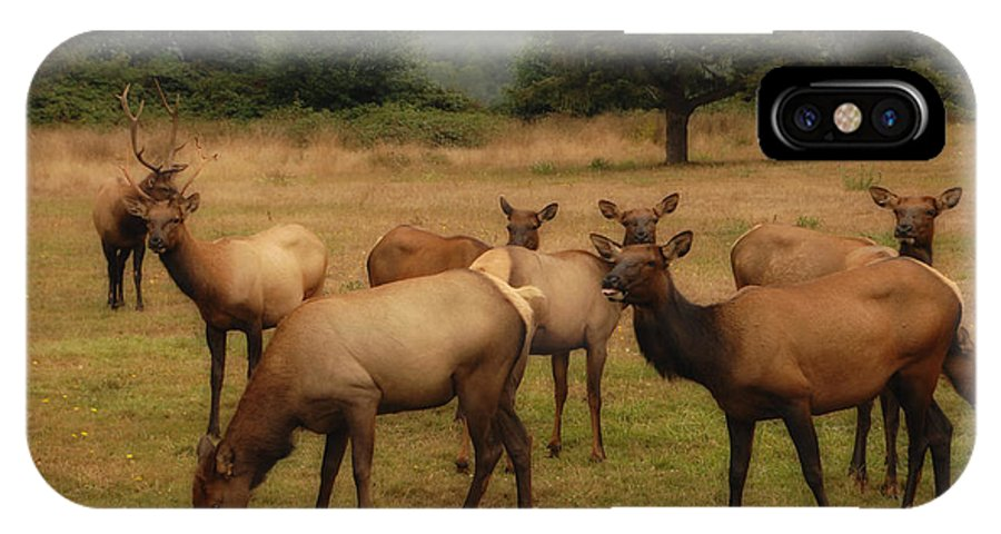 Elk IPhone X Case featuring the photograph Elks Lodge by Donna Blackhall