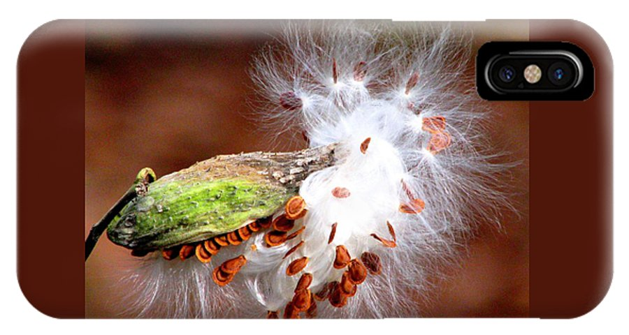 Milkweed IPhone X Case featuring the photograph Emerging by Angela Davies