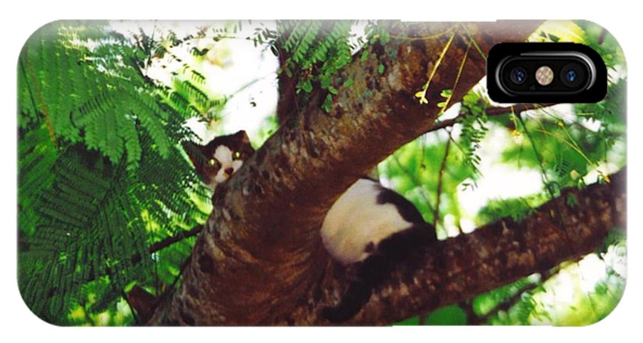 Up A Tree With Out A Ladder IPhone X Case featuring the photograph Emmie by Robert Floyd