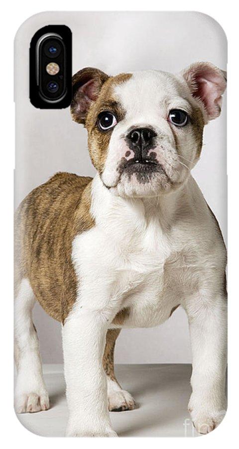 English Bulldog IPhone X / XS Case featuring the photograph English Bulldog by Johan De Meester