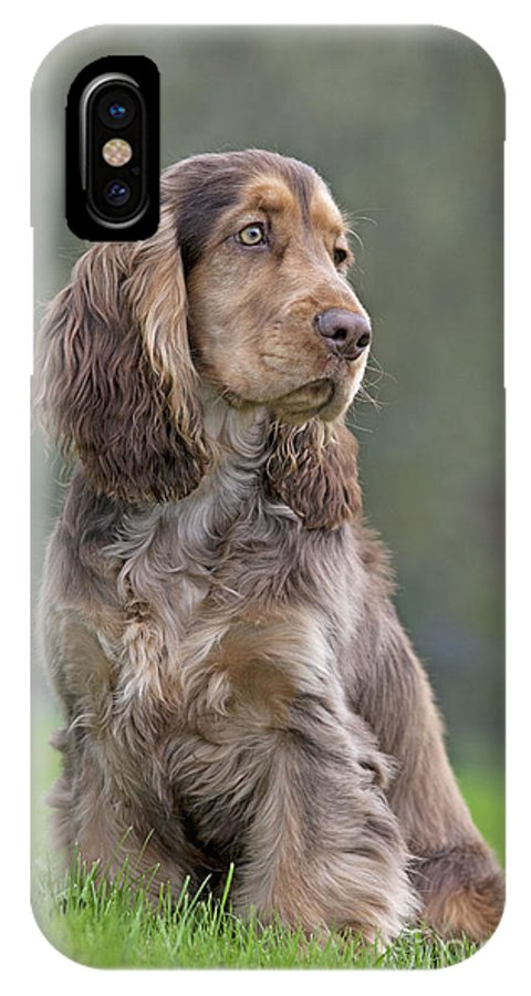 English Cocker IPhone X / XS Case featuring the photograph English Cocker Spaniel Dog by Johan De Meester
