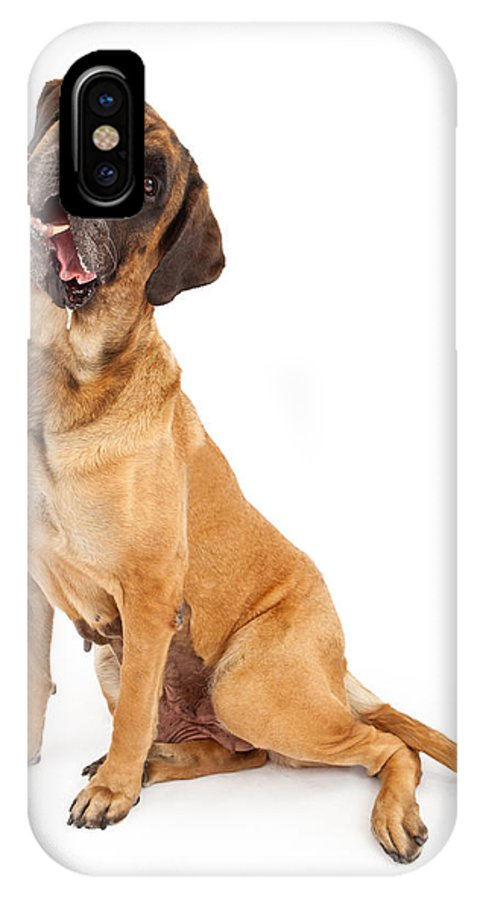 Dog IPhone X Case featuring the photograph English Mastiff Dog With Tilted Head And Drool by Susan Schmitz