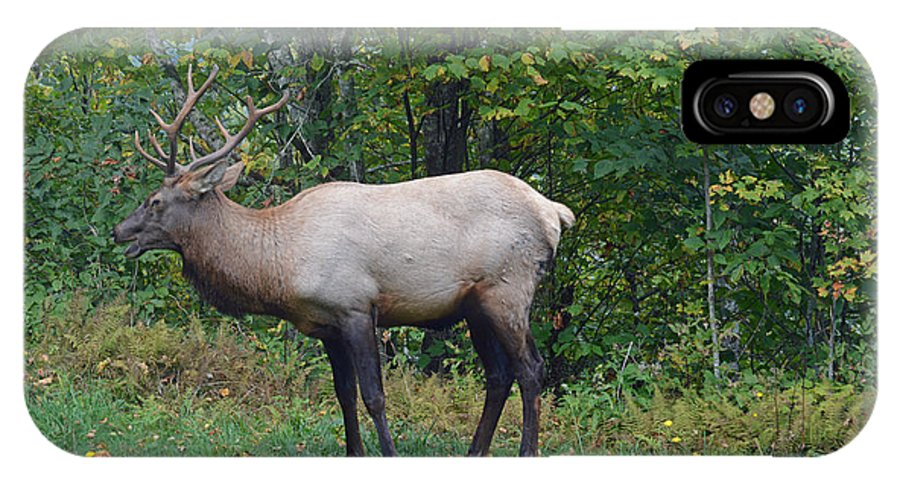 Elk IPhone X Case featuring the photograph Enough With The Pictures by Tom Williams