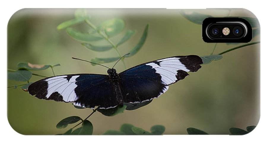 Butterfly IPhone X Case featuring the photograph Equal by Ronald Lake