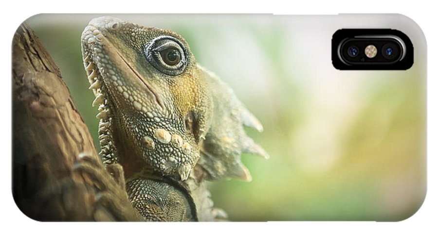Lizard IPhone X Case featuring the photograph Eric The Lizard by Sherry Wright