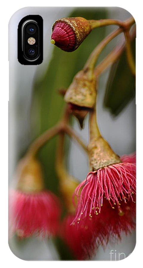 Eucalyptus Tree Flower IPhone X Case featuring the photograph Eucalyptus Flower by Joy Watson