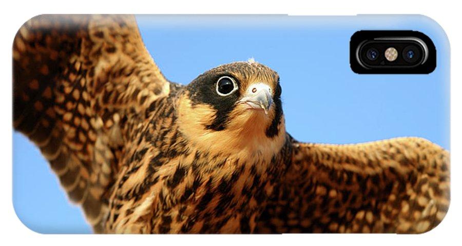 Villafafila Natural Park IPhone X Case featuring the photograph Eurasian Hobby Falco Subbuteo In by David Santiago Garcia