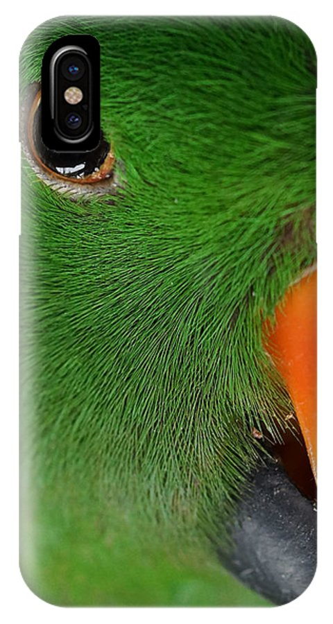 Eclectus Parrot IPhone X Case featuring the photograph Evil Eye by Ernie Echols