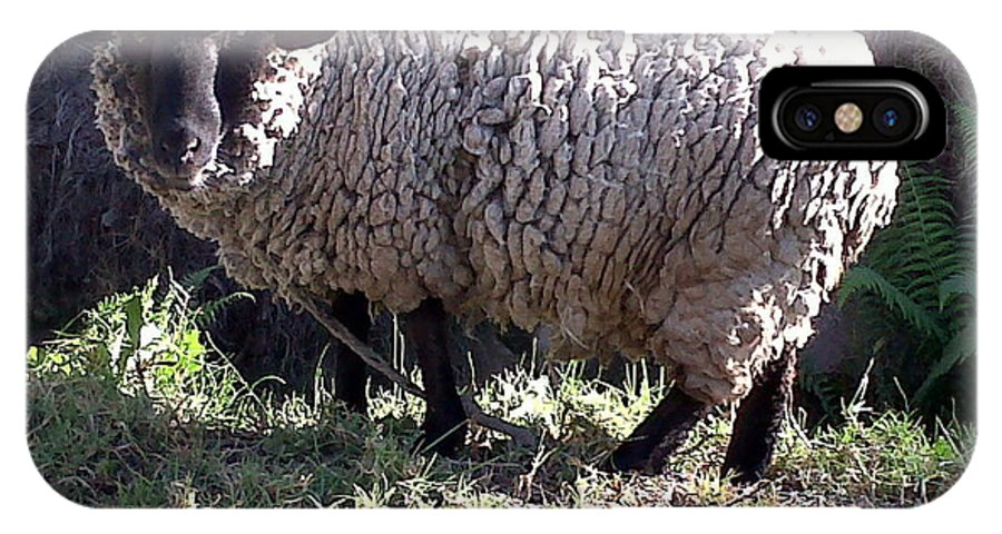 Sheep IPhone X Case featuring the photograph Ewe's So Fluffy by Lew Davis