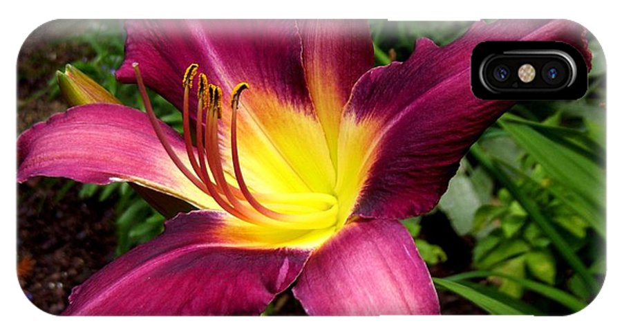 Daylily IPhone X Case featuring the photograph Extravagant by Terri Waselchuk