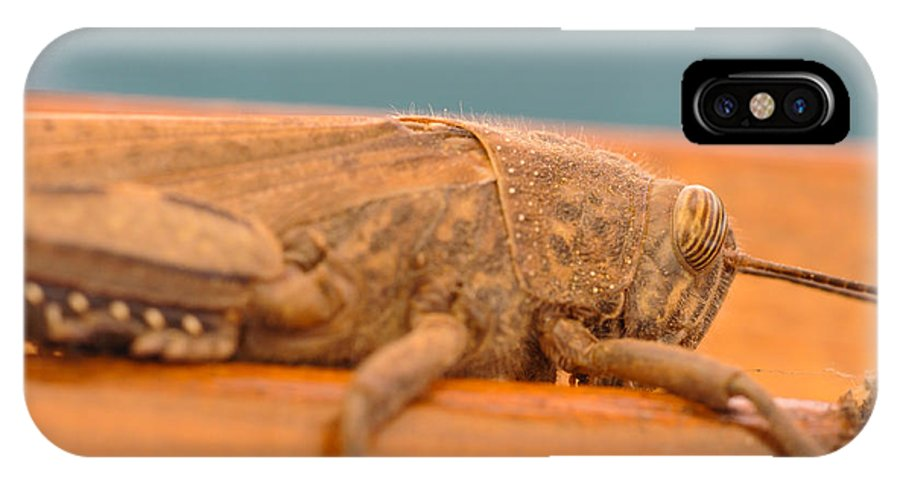 Acrididae IPhone X / XS Case featuring the photograph Extreme Locust by Luca Venturelli