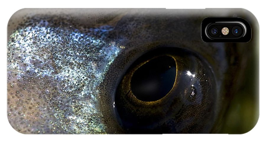 The Three-spined Stickleback IPhone X Case featuring the photograph Eye Of A Stickleback by Ronald Jansen